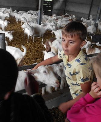 Boerderijkampen 2020 De Klaverlochting Impe
